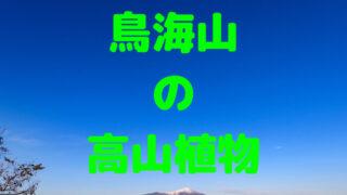 鳥海山の高山植物