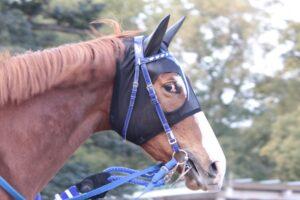 目つきの悪い馬(サッカーボーイではありません)